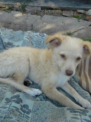 беларусь продажа голой мексиканской собаки: