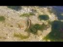 Змея в море