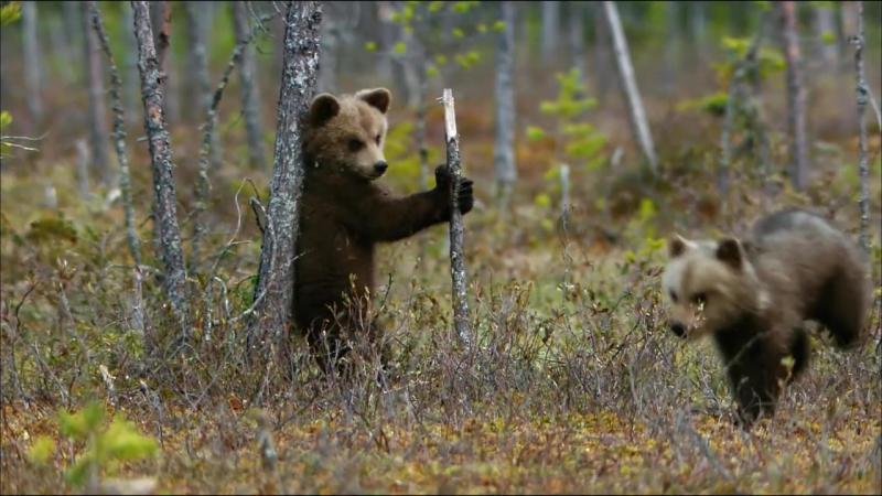 Дикая природа Скандинавии - Финляндия - 1080