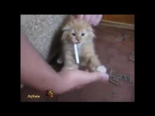 Говорящие коты и кошки - смотрите лучшие приколы про котов