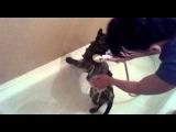 Как я купаю кота.