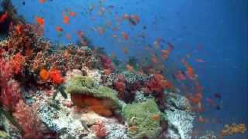 Просто нереально красивый подводный мир ✦ Amazingly beautiful underwater world ✦ LUCKY