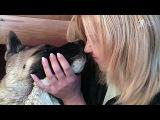 В США ученые провели исследование о пользе поцелуев с собаками - Первый канал
