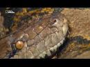 Самые опасные змеи Азии
