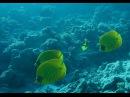 Красное море, Судан. рифы рядом с подводной деревней Кусто,.Relaks.