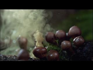 Красивое видео о загадочной дикой природе под песню «Hello Tomorrow»