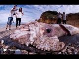 Top-10 Самых невероятных вещей, которые выбросило в море