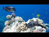 Релакс видео Яркие краски Подводного мира Underwater world and relax