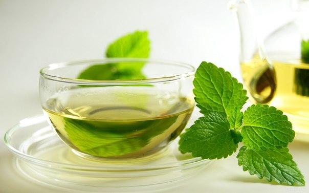чай от паразитов состав в домашних