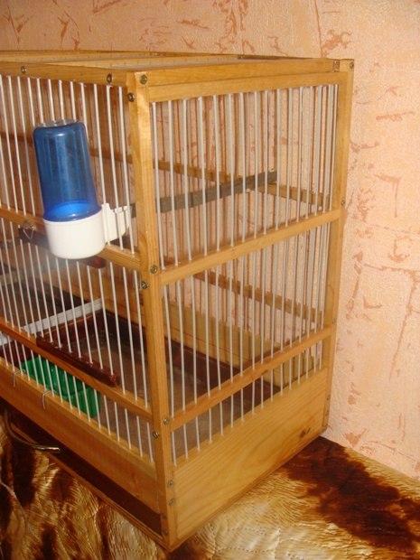 """Фотографии """"птичей комнаты""""  - Страница 2 ReYsrgh394w"""
