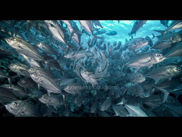 Undersea Realm in 4K underwater nature video stock footage demo reel UltraHD UHD