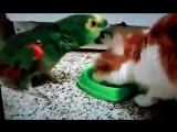 видео про котика и попугая