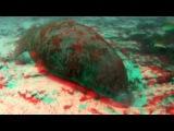 Большое путешествие вглубь океанов 3D часть3 6 OceanWorld 3D