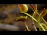 Крис Филд (Chris Field) снял красивый, но смертельно опасный мир плотоядных растений.