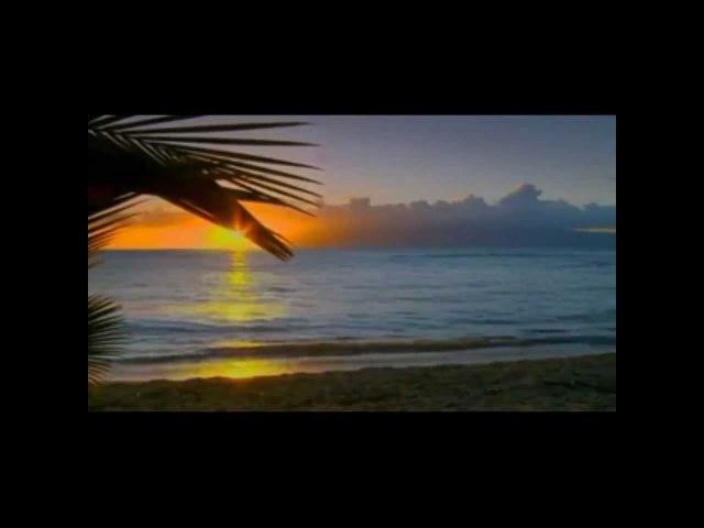 Chris Rea All Summer Long Shamrock Diaries