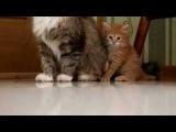 Котята Серый и Рыжий. Милое видео про котят.
