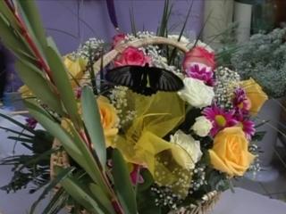 Живые бабочки для подарка в корзине с цветами.