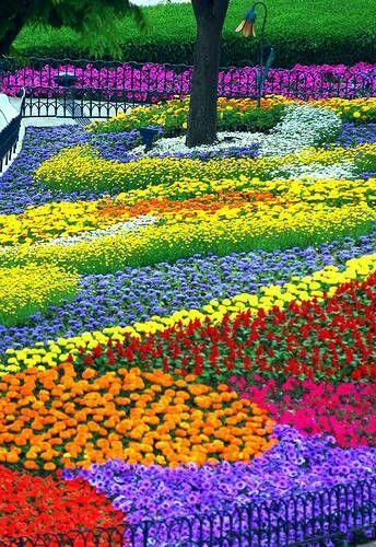 Клумбы на даче-цветник-радуга