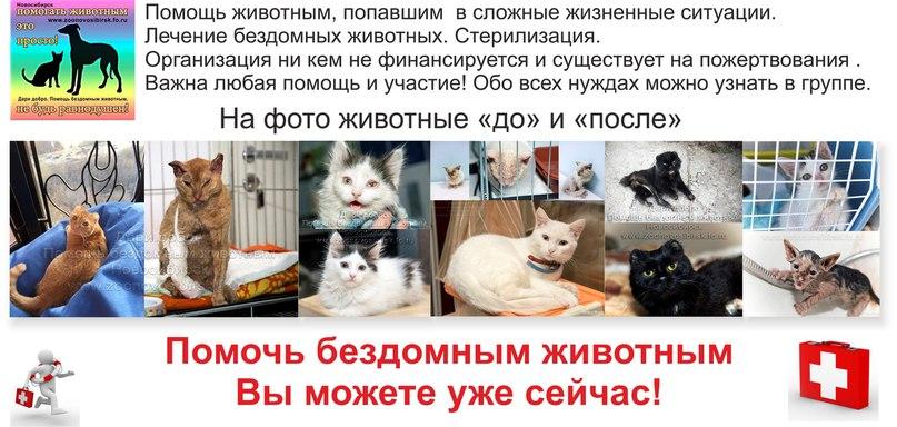 vk.com/zoonovosibirsk