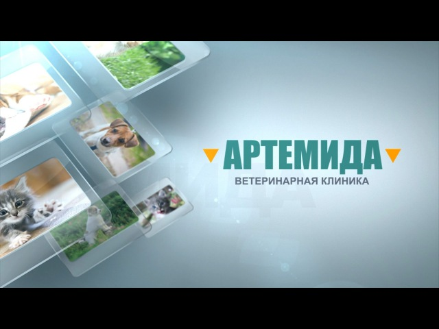 Ветеринарная клиника «Артемида» г. Владимир