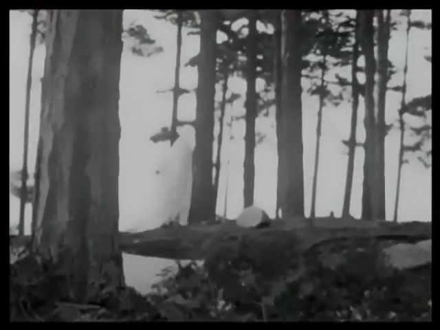 Dwig - Feige Dattel [Giegling 09]