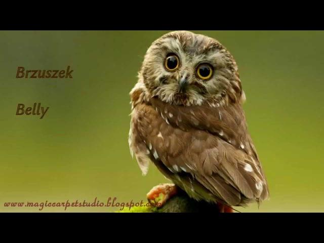 Samouczek - jak zrobić sowi dywan / A complete tutorial on making an owl-shaped carpet