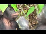 Спаривание животных Секс Леопарды Гориллы Лошади Mating animals Leopards Gorillas Horses 18+