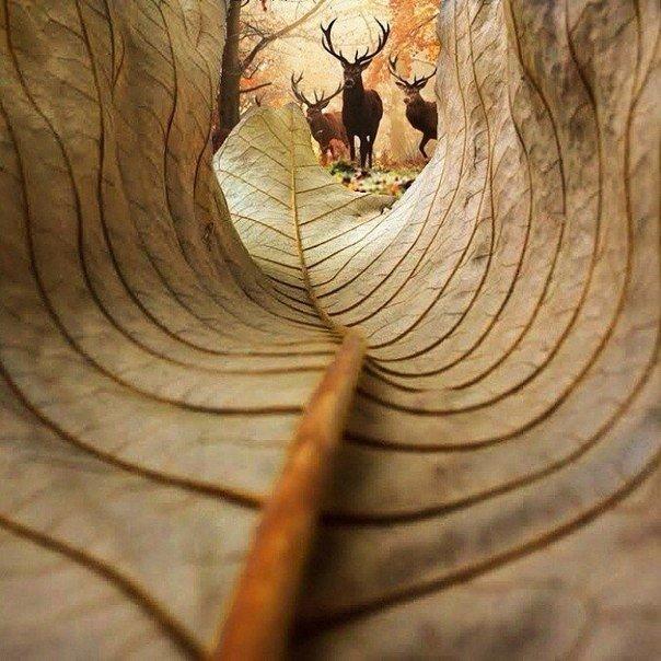Осень в лесу. Автор фото: Kobi Refaeli.
