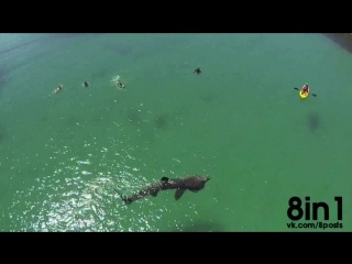 У побережья Ирландии мужики столкнулись с Гигантской акулой / Basking Shark in Cape Clear, Irland