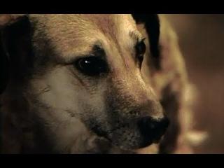 Хозяин, будь человеком! Собаки - документальный фильм