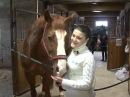 Лошадей приходится спасать от хозяев, почему?
