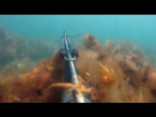 Гурзуф 2013 , подводная охота !