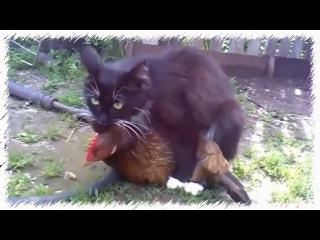 Порно с курицами