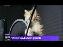 """Trupa de pisici. """"Pisi Cat Production"""" prezintă ultimul single al unei trupe de succes, care se anunţă, deja, mare hit"""