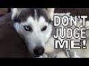 Psychostick - Dogs Like Socks [official music video] I'm a dog and I like socks