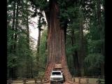 Кемпинг на деревьях Калифорния GIL-VENTURA-Hotel-California