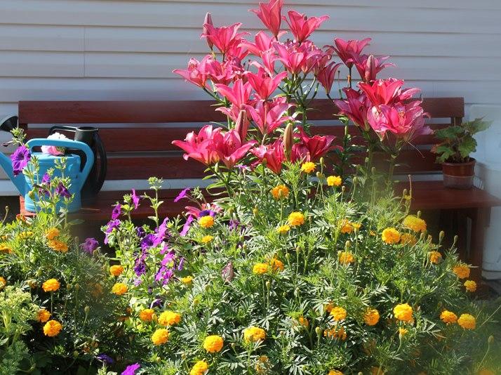 Цветы и описание для сада