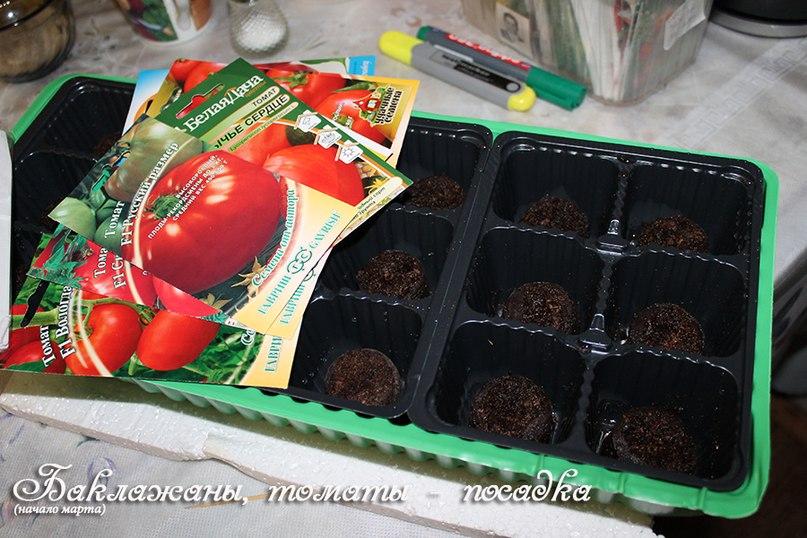 Как правильно сажать томаты и баклажаны на рассаду, чтобы получить большой урожай