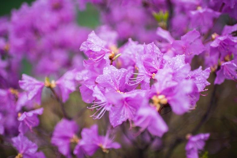 цветы сеул