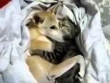 Собака не хочет будить кота