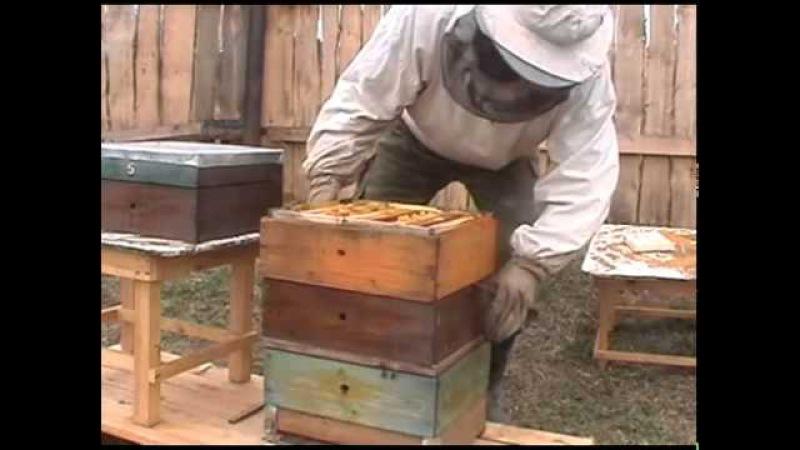 Улей Удав Технология пчеловождения