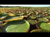Открытие реки Амазонки в ВС Амазонка: Солнечная река