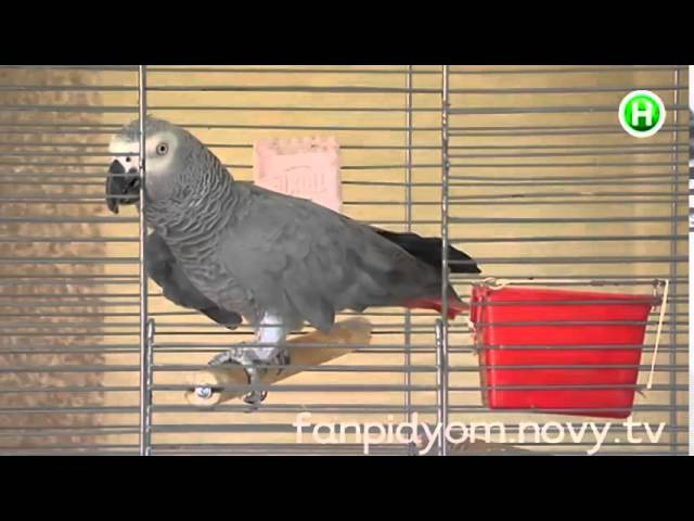 Попугай-патриот каждый день поет гимн Украины