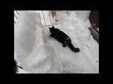 "Animals Video on Instagram: ""Black cat jumps in to snow , Video by AFVApproved"""