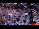Fractalfest - Trippy 4 Hour HD Fractal Compilation
