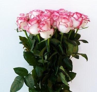 Купить розы 10 штук подарок на 8 марта из шаров фото