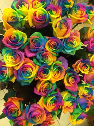 Розы спб
