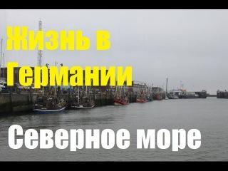 Жизнь в Германии * Северное море * Тюлени в дикой природе