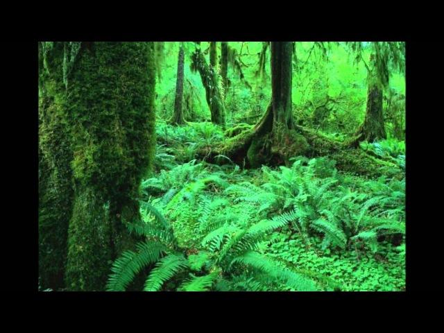 Рациональное использование и охрана лесов mp4