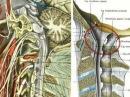 ПРАВИЛЬНАЯ Диагностика смещения Атланта. Новокузнецкий институт усовершенствования врачей